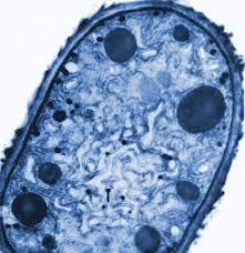 imagescyanobacteria